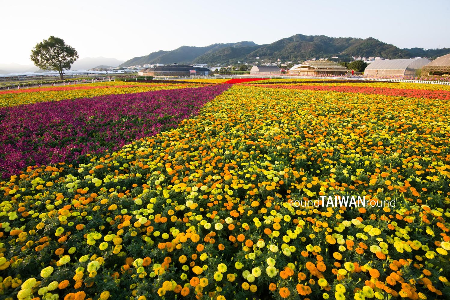 xinshe sea of flowers round taiwan round