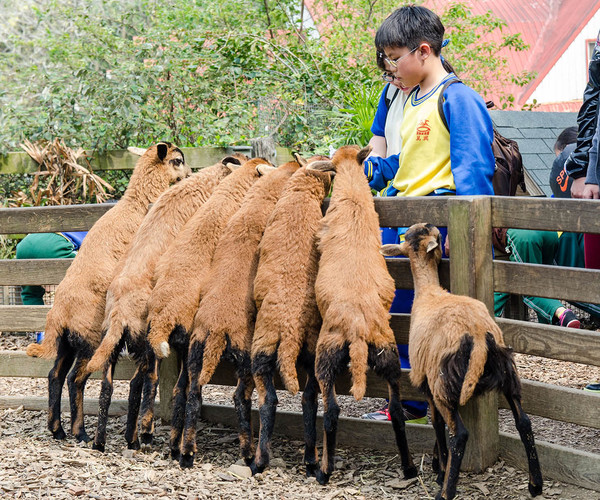 View More Miaoli   Cows And Kids
